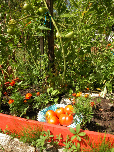 oh-les-belles-tomates.jpg